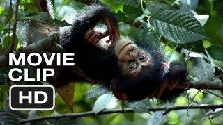 Chimpanzee - Chimpanzee Movie CLIP - Swingin' (2012) Disney Nature Movie HD