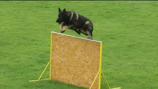 Urri z Kurimskeho haje - Slovak Championship GSD and 2nd Qualification trial FCI / WUSV 2015 - B: 93