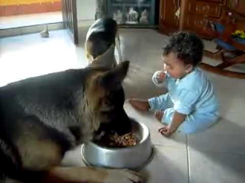 Perro y bebé ''peleando'' por la comida