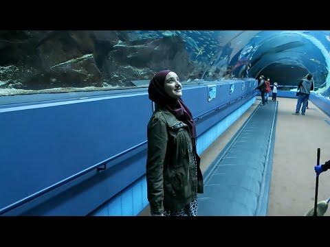 The Yaz Show – Georgia Aquarium