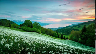 Playlist Of Relaxation Music With Soft Meadow Background Sounds For Spa Sleep Yoga Study Massage