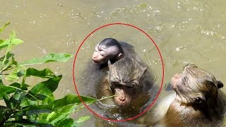 Unbelievable ! Baby Monkey Nearly Go Away Cos Water ST1066 Mono Monkey