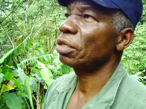 Tropical vegetable and fruit garden, Dominica J73CPL J79WWW LCF Group