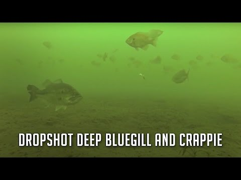 Drop Shot Fishing for Deep Crappie and Bluegill