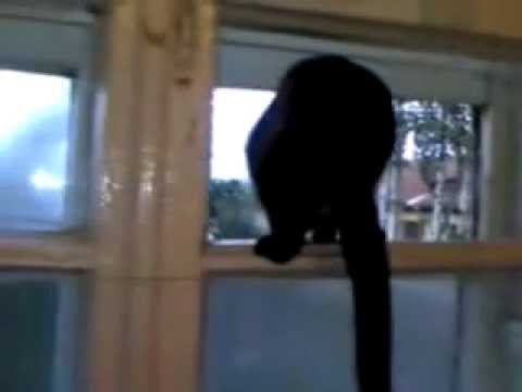 Cat Barks Like a Dog video
