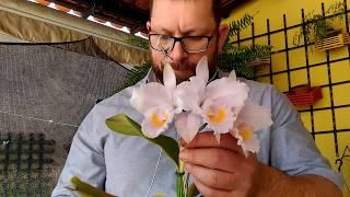 Segredos para estimular brotação e raízes nas orquídeas