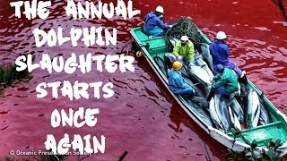 Massive Annual Dolphin Slaughter Starts Once Again