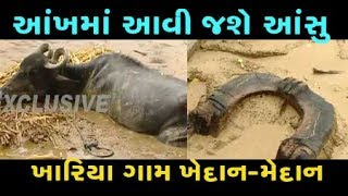 EXCLUSIVE : You will cry after watching flood hit village Khariya in Banaskantha, Gujarat