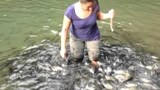 මාළුන් අක්කට වහ වැටිලා වෙච්ච දෙයක් ! Fish Spa at Sg Moroli, Kg Luanti Baru (Ranau)