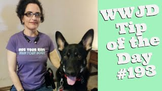 What Would Jeff Do? Dog Training Tip of the Day #193 Dog Training Lies