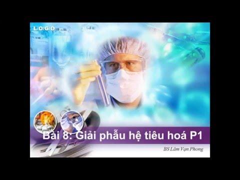 Học tiếng anh chuyên ngành Y-bài 8: Giải phẫu hệ tiêu hoá P1