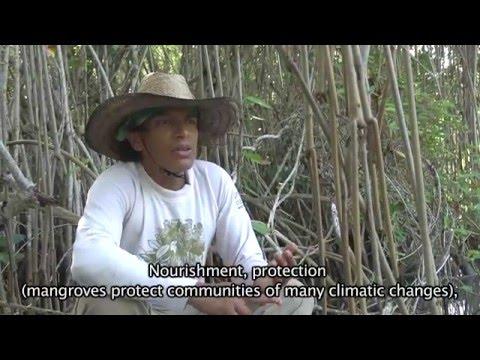 Alvarado Veracruz Lagoon System, Chinampa Restoration Technique (Floating Islands)