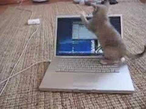 Funny cat playing Mac