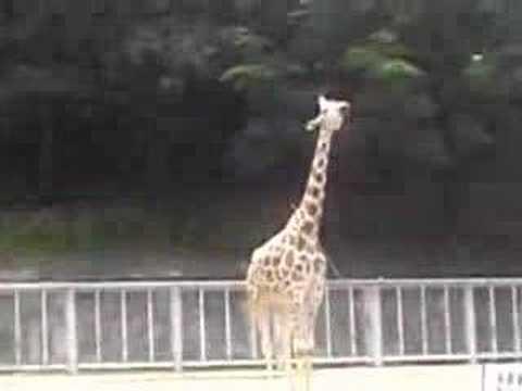 東山動物園にて・・・