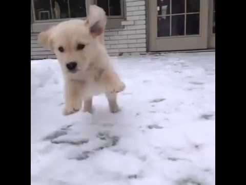 Cute Puppies Playing in Snow First Time in Snow Cute Puppy