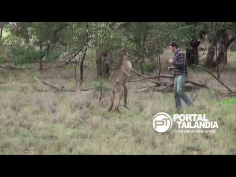 Homem vs Canguru: Homem dá soco no animal que feria um cachorro