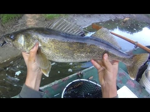 Lure Fishing #65 - Jig and Jerkbait Walleye Fishing Float Trip on a Small River