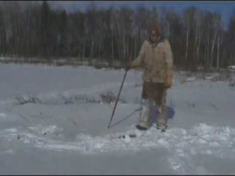 Beaver Trapping in Minnesota