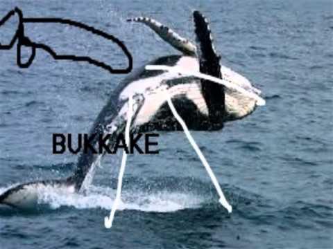 killer whale sex