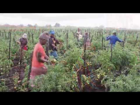 OVERVIEW  - Making Markets: Land Reform, Agriculture and New Local Economies in Zimbabwe