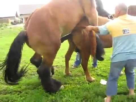 Horses Mating video