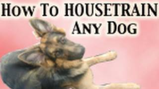 Dog Training Tutorial- HOUSETRAINING
