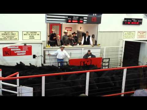 2015 Rodgers Angus-Knoxville Reg Livestock Auction