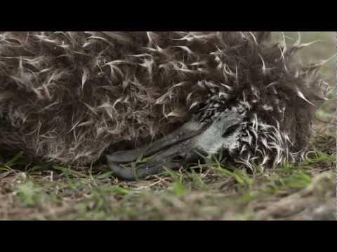 MIDWAY - Un film documentaire de Chris Jordan - Bande annonce