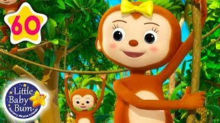 Five Little Monkeys Swinging in The Tree |  + More Nursery Rhymes & Kids Songs | Little Baby Bum