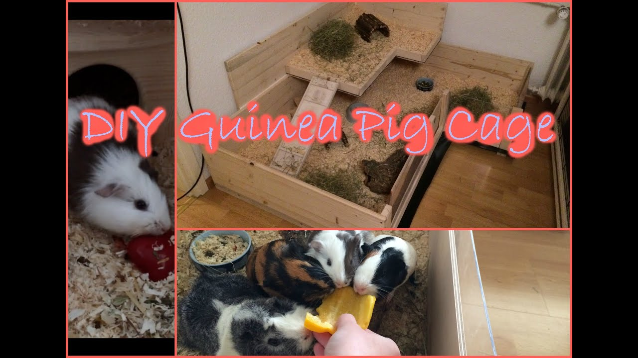 Diy guinea pig cage with plexiglass front youtube for Diy guinea pig things