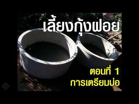 เลี้ยงกุ้งฝอย ในบ่อซีเมนต์ แบบบ้านๆ ตอนที่ 1 การเตรียมบ่อ