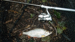 Roach fishing on a brook. Angling conditions not ideal? Just go anyway! (Blog entry 709)