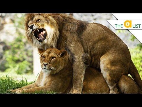 5 Animals That Have Killer Sex video
