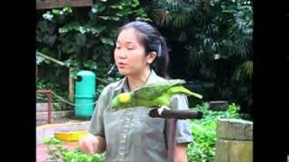 Funny Parrot is Singing