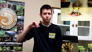 Basic Tree Frog Setup & Care