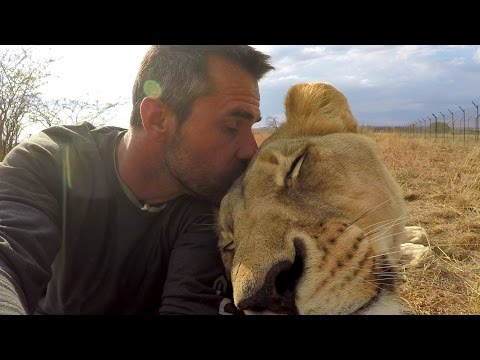 Kevin Richardson on American Tourist Killed by Lion   The Lion Whisperer