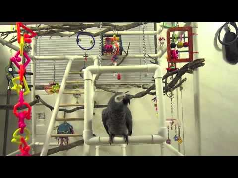 A Selfmade Play Gym For Dvorak Youtube