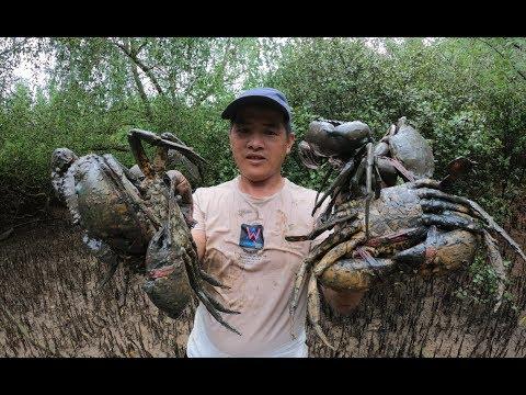 红树林里的大螃蟹没人抓,刀仔连抓好几只超大的,今天发财了