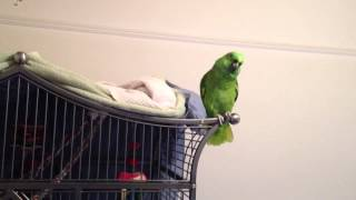 FUNNY Things Our Parrot Says Before Bed