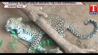 Leopard Stuck in Hunters Trap  | Rescued From Officials | Kamareddy  live Telugu