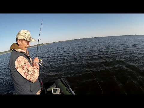 судак ловля август 2016