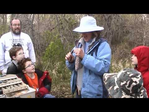 Bird Banding witn Meredith McBurney