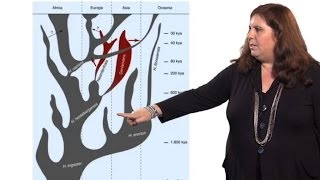 Evolutionary Analysis Using Ancient DNA - Sarah Tishkoff (U. Pennsylvania)