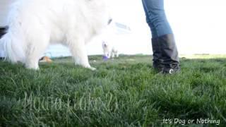 Watch Fluffy Crawl video