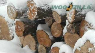 Exports of round wood logs poplar & aspen from Ukraine | Supply to UAE, India, China