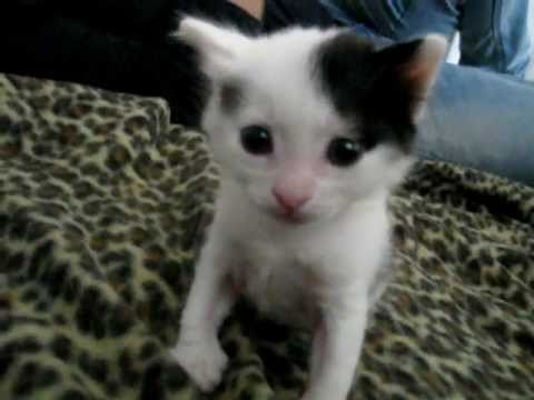 Kitten sneeze scariest ever! ORIGINAL