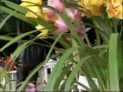 Exposição mostra diversos tipos de Orquídeas em Tubarão