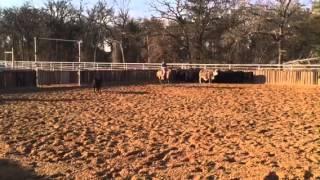 Tucker- Jared Lesh Cowhorses