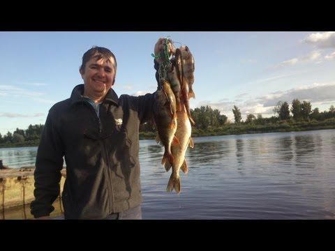 как ловить рыбу на западной двине
