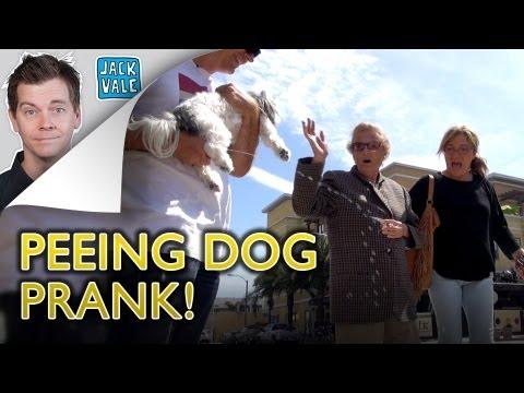 The Peeing Dog Prank! video